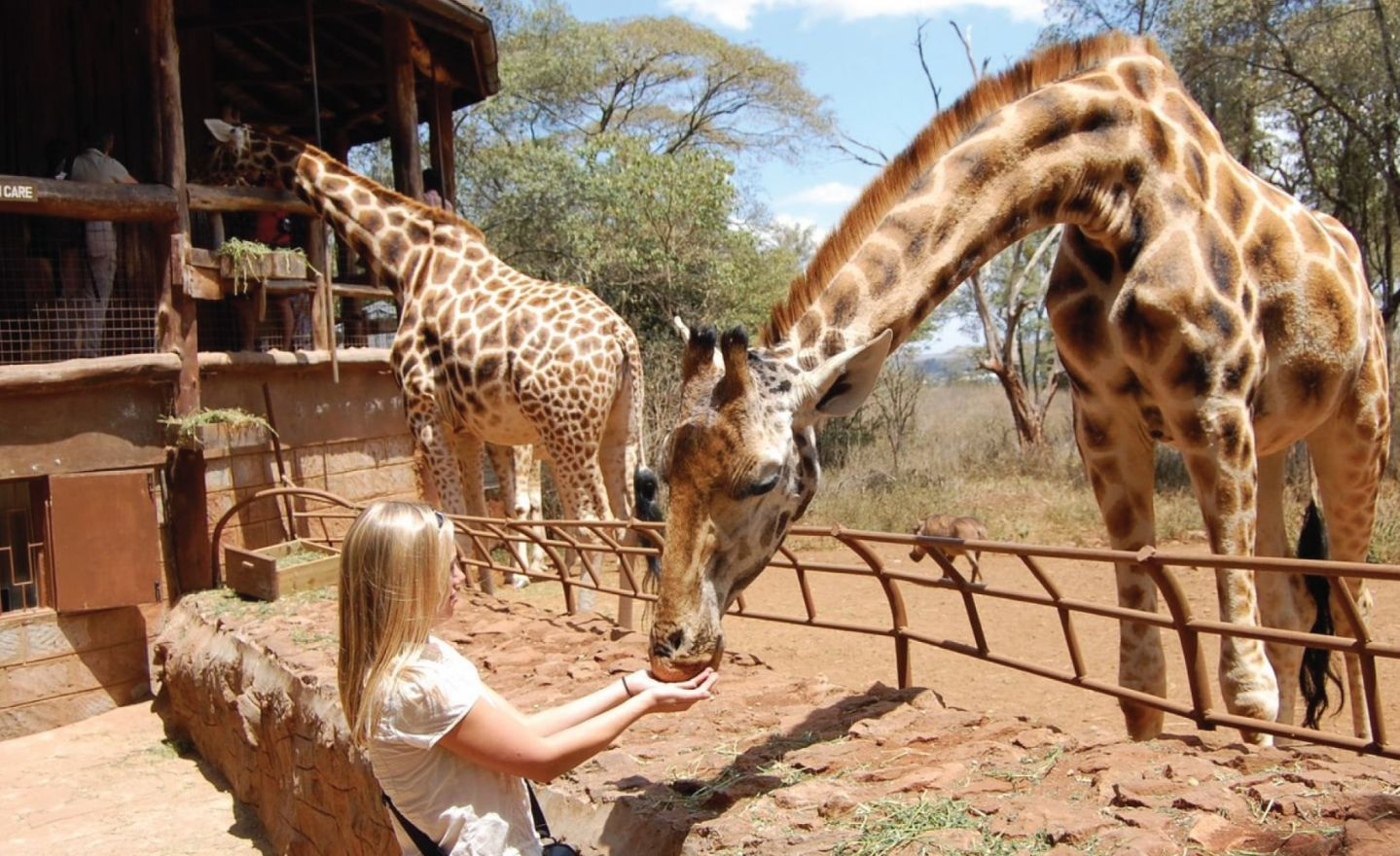 Giraffe Center Nairobi