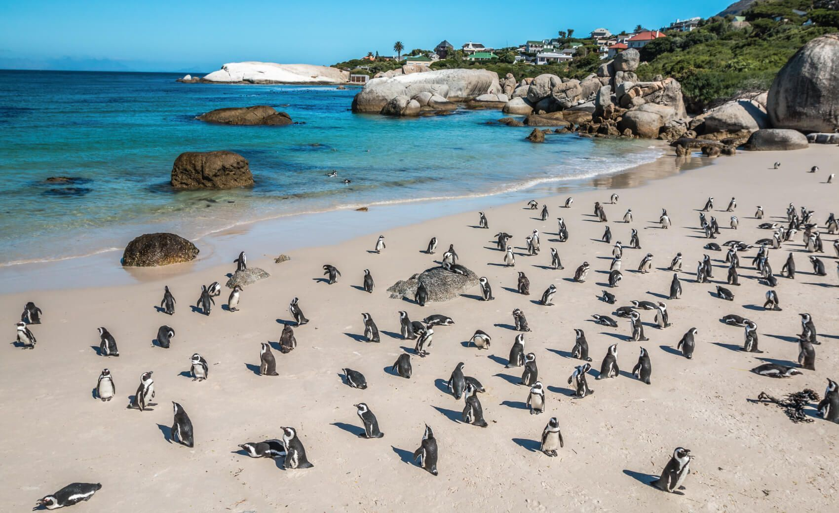 Penguin Colony - Boulders Beach, Cape Town, South Africa