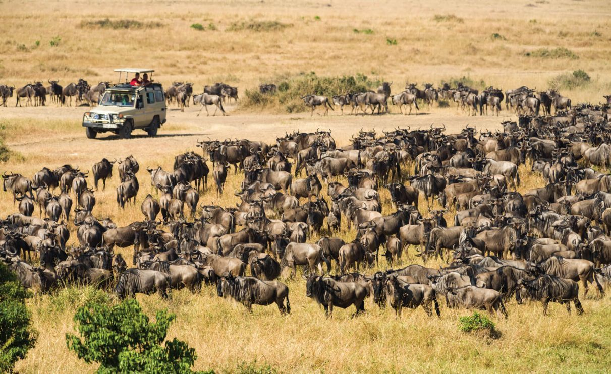 Vehicle with tourists stopped watching wildebeest migration, Masai Mara, Kenya