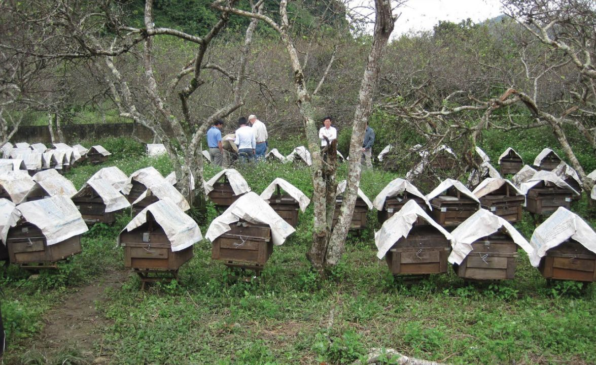 Beekeeping House in Vietnam