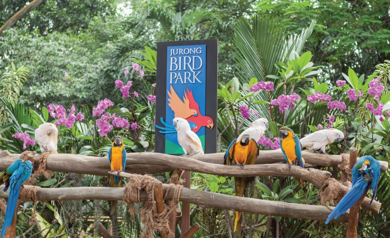 Jurong Bird Park is a popular tourist attraction in Singapore