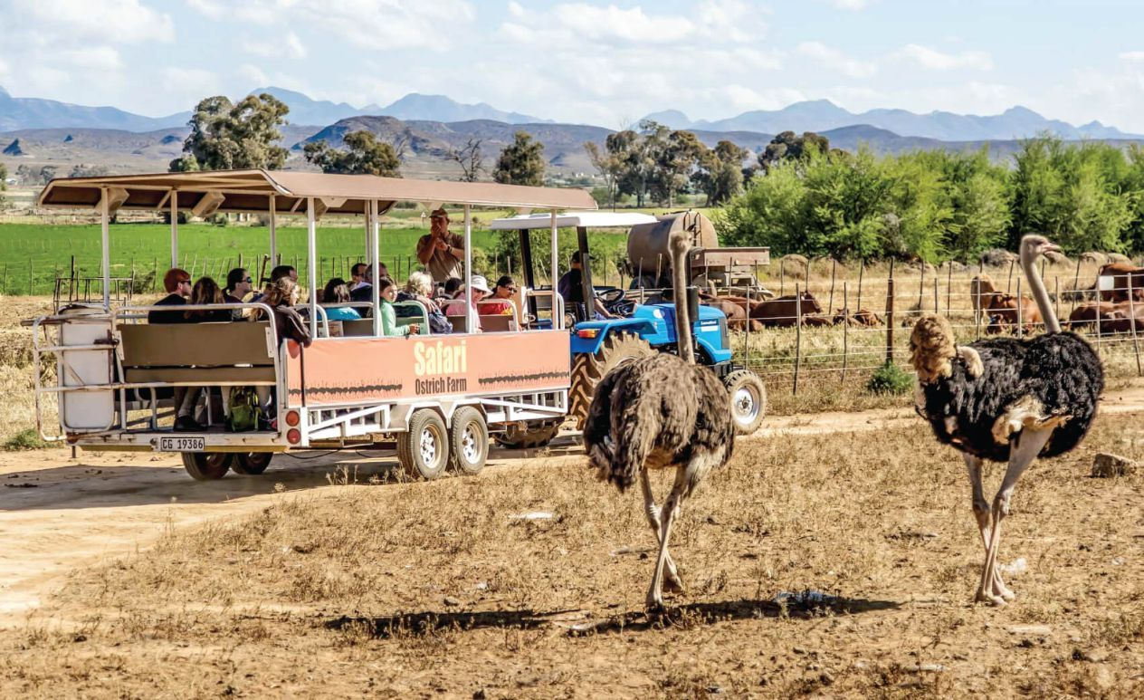 Safari Ostrich Farm